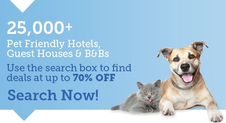 Pet friendly hotels, b&b & accommodation
